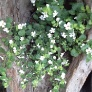 Plantor