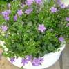 butiken_20110805_1593845926.jpg