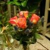 skicka_blommor_20141128_1373713599.jpg