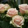 skicka_blommor_20180210_1910179375.jpg